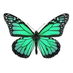 Monarch butterfly Coloring Page . Monarch butterfly Coloring Page . Detailed butterfly Coloring Pages Coloring Pages Monarch Butterfly Images, Monarch Butterfly Tattoo, Cartoon Butterfly, Butterfly Drawing, Green Butterfly, Butterfly Painting, Butterfly Wallpaper, Butterfly Colors, Butterfly Outline