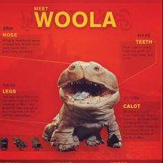 ...where can I get a woola? I need him in my life...<3...