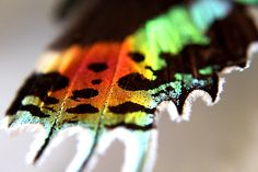 Sunset Moth Wing by Robbie Labanowski Butterfly Art, Butterflies, Moth Wings, Bugs, Creepy, Insects, Creatures, Design Inspiration, Sunset