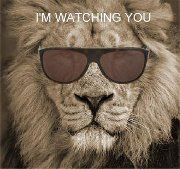 lion in shades