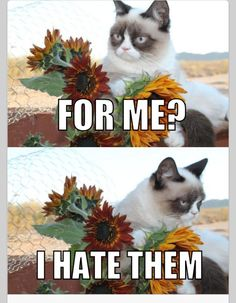 I love this !!  Angry Cat!!