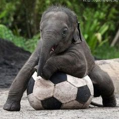 Elephants. My love for them is so strong.