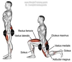 Dumbbell lunge. A highly recommended compound exercise, brilliant for developing unilateral lower-body strength! Target muscles: Quadriceps (Vastus Lateralis, Vastus Intermedius, Vastus Medialis, Rectus Femoris). Synergists: Gluteus Maximus, Adductor Magnus, and Soleus. Visit site to learn proper form.