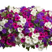 Hanging basket idea, These are the colors  I want to use for flowering plants