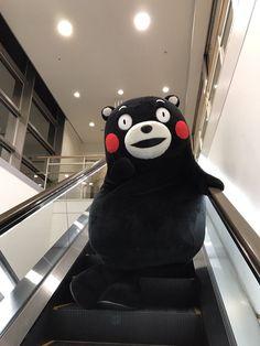 Cute Gif, Funny Cute, Molang, Disney Characters, Fictional Characters, Funny Memes, Bear, Japan, Cool Stuff