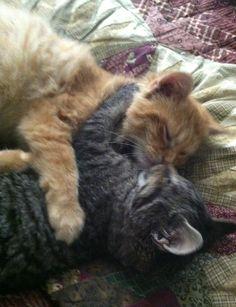 Kissing cousins!