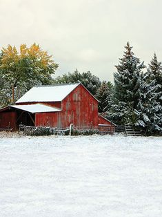 Our Winter Barn backdrop encapsulates a quiet winter's day in the country complete with a traditional red barn and snow covered pine trees.