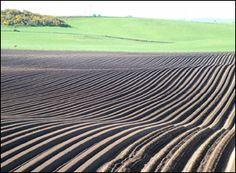 Ploughed field, Elgin