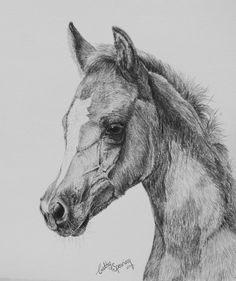 Foal sketches day 19 - arab foal projecten om te proberen in Horse Pencil Drawing, Horse Drawings, Animal Drawings, Pencil Drawings, Art Drawings, Painting & Drawing, Watercolor Paintings, Knife Painting, Horse Sketch