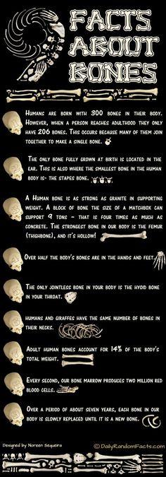 facts about bones