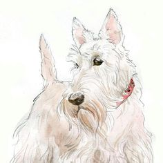 Do this watercolor for a Westie! Horses And Dogs, Animals And Pets, Schnauzer Art, West Highland Terrier, Dogs Of The World, New Puppy, Westies, Dog Art, Pet Portraits