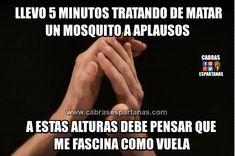 Mosquitos de verano, esa plaga