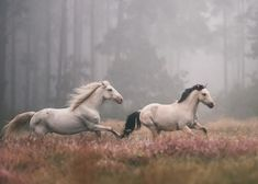Imagem de horse