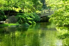 Ft. Worth Japanese Gardens - This place looks beautiful!
