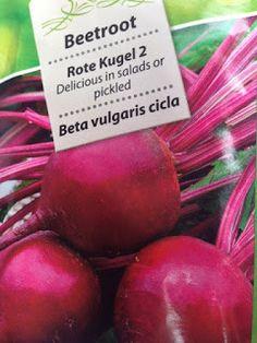 VIDA FELIZ: na Horta: Como Semear, Plantar e Colher BETERRABA