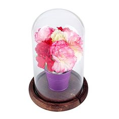 AerWo 4 X 7 Inch Glass Display Dome + Wooden Base, Decorative Clear Glass Cloche Bell Jars Display Dome for Gifts Decoration Glass Dome Display, Glass Domes, The Bell Jar, Bell Jars, Wedding Doll, Wood Glass, Store Displays, Festival Decorations, Floral Bouquets
