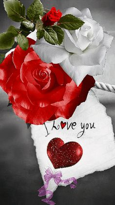i love you I Love You Pictures, Love You Gif, Beautiful Love Pictures, Romantic Pictures, Beautiful Gif, Love Images, Beautiful Rose Flowers, Love Rose, Hearts And Roses