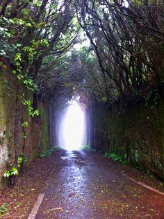 El bosque encantado (Tenerife)