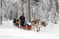 Reindeeer Safari in Holiday Village Gulo Gulo in Ranua