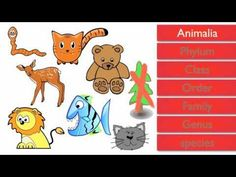 Classification of Living Things youtube 4 min Goes into scientific names but could be used to show how many animals look similar but don't fit into the same species