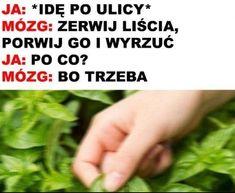 Very Funny Memes, Wtf Funny, Hilarious, Funny Lyrics, Polish Memes, Weekend Humor, Funny Mems, Best Memes, Funny Photos