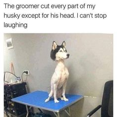 This poor dog. Lol This poor dog. Funny Animal Jokes, Stupid Funny Memes, Cute Funny Animals, Funny Cute, Funny Dogs, Funny Stuff, Funny Husky Meme, Scary Funny, Funny Chicken Memes