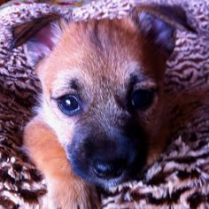 """One of my new puppies """"Grizzly Little Bear"""". TDB"""