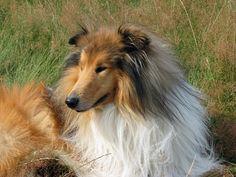 Beautiful dogs 1 (8)