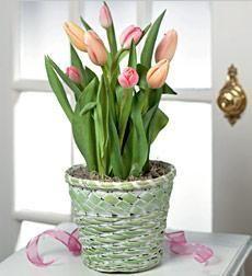 Send someone this beautiful symbol of spring! by Mission Viejo Florist #MissionViejo #OC Florist