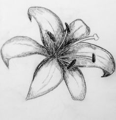 Pencil Lilly