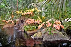 """Orchids like these are set to seduce visitors to the New York Botanical Garden as the annual """"Orchid Show"""" opens this weekend. Garden Trees, Plants, Botanical Gardens, Fruit Trees, Shade Tolerant Plants, Flowers, Houseplants, Orchid Show, Greenhouse"""