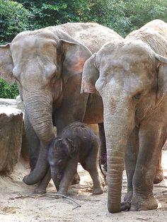 .dierentuin Emmen