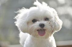 :) I'm a sucker for a fluffy white dog  me too