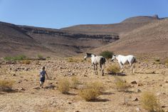 Enjo Nature Farm – a little slice of paradise in the Cederberg.