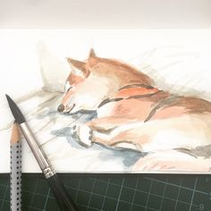 My shiba puppy Yoshi