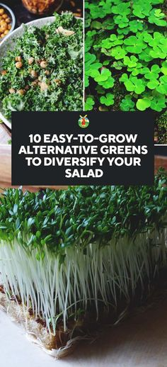 10 Easy-to-Grow Alternative Greens to Diversify Your Salad