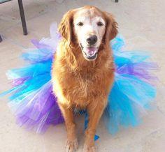 ballet doggy