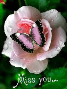 Delicate rose with butterfly