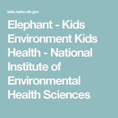 Elephant - Kids Environment Kids Health  - National Institute of Environmental Health Sciences