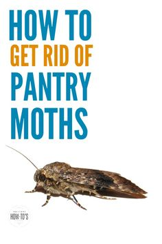 How to Get Rid of Pantry Moths - These tips kill the pests and keep them from coming back Natural Cleaning Solutions, Natural Cleaning Products, Cleaning Recipes, Cleaning Hacks, Moths In House, Baby Moth, Getting Rid Of Moths, Pantry Moths