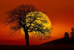 """""""In Search of the Sun,"""" by Peter Lik; his first release of 2013,"""