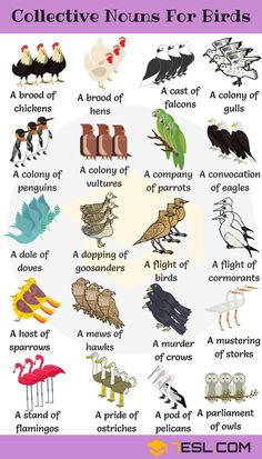 250+ Useful Collective Nouns For Animals in English - 7 E S L