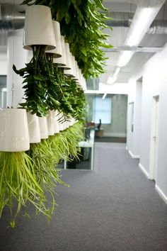 Boskke pots installation. Clever use of plants 'upside' down!