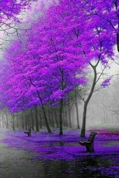 purple skies reflect their beauty in the puddles, splashing the scenery with a reflection of my soul! Purple Love, All Things Purple, Purple Rain, Shades Of Purple, Purple Trees, Purple Stuff, Lilac Sky, Beautiful World, Beautiful Images
