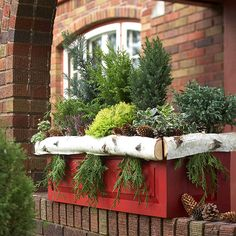 This window box displays at least six different varieties of evergreens accented with pinecones and multicolor foliage. Add a seasonal accent to the bright red container with bits of evergreen tucked under birch logs along the edge.