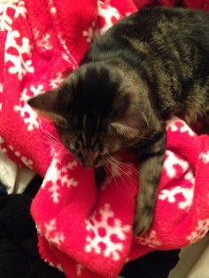 Fuzzy blankey