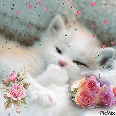 I love this kitten .