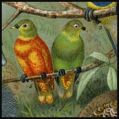 Colorful Natural History Print of  Pigeons Doves and Quail.