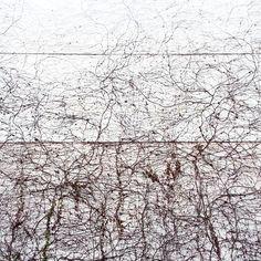 Enredada /Tangled #buenosairescomoyolaveo #muro #wall #enredadera #ivy #plantas #plants #abstracto #abstrac #blancoynegro #blackandwhite