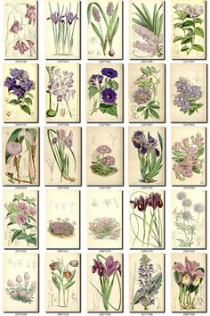 Old Paper, Paper Art, Paper Crafts, Images Vintage, Vintage Pictures, Vintage Sticker, Illustration Blume, Journal Stickers, Antique Maps